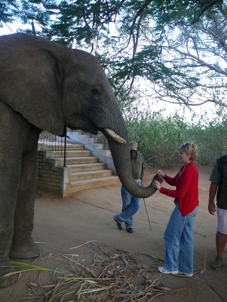 Elephant-Whispers-South-Africa