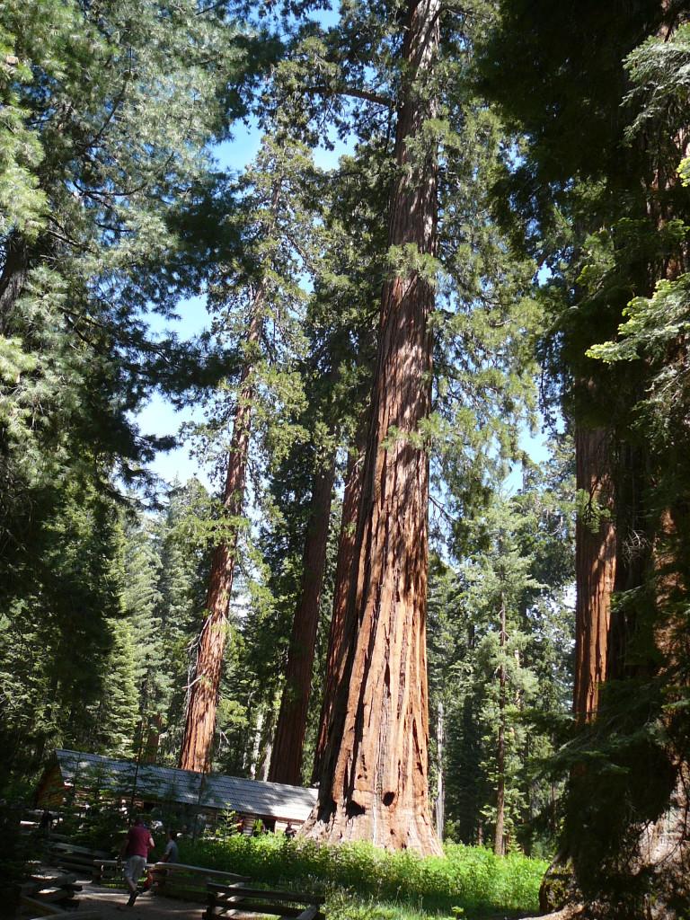 Yosemite-Grand-Tour-Yosemite-National_Park-United-States