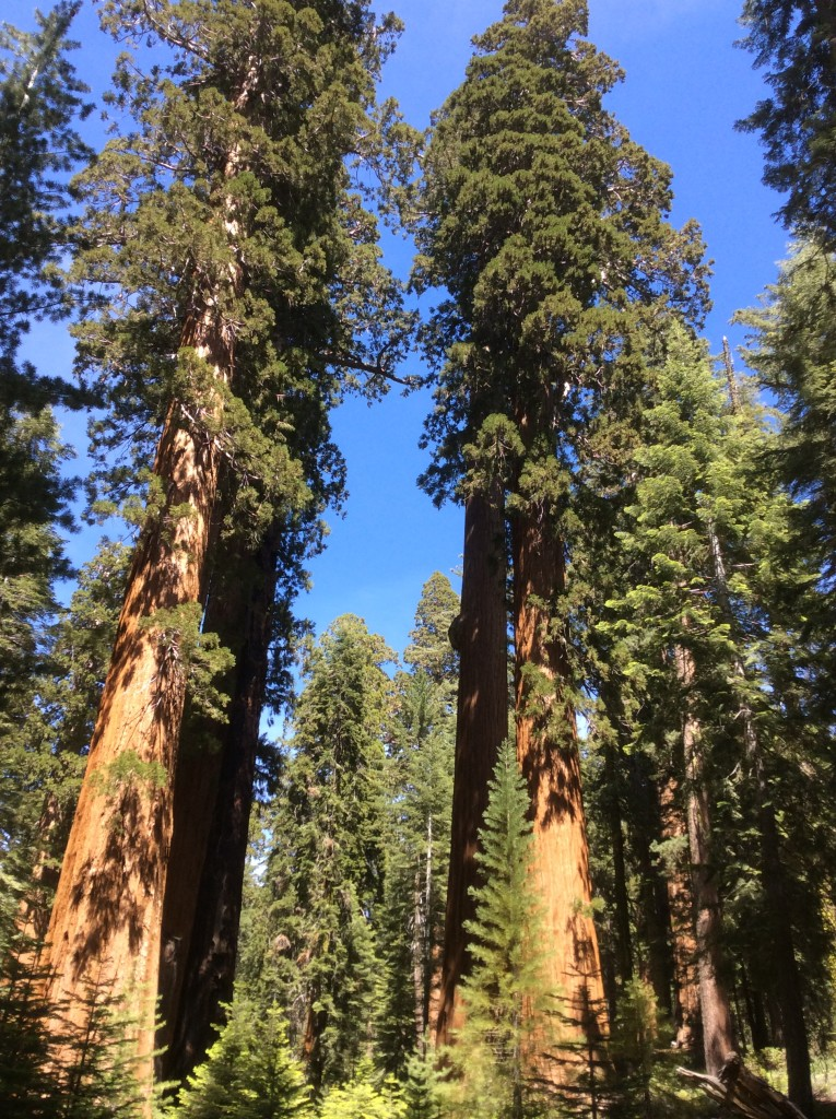 Mariposa Grove-Yosemite-National-Park-USA