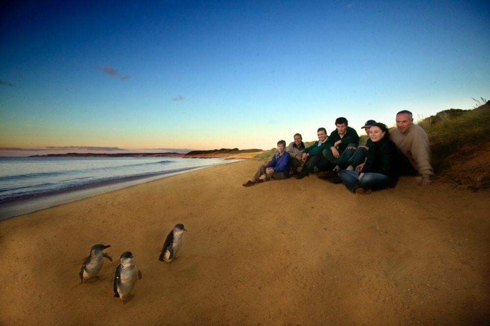 Ultimate-Penguin-Tour-Phillip Island
