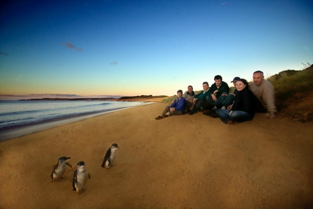 Ultimate-Penguin-Tour-Phillip Island