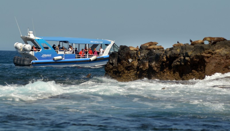 The EcoBoat Tour, Phillip Island. Image courtesy of Phillip Island Nature Parks.