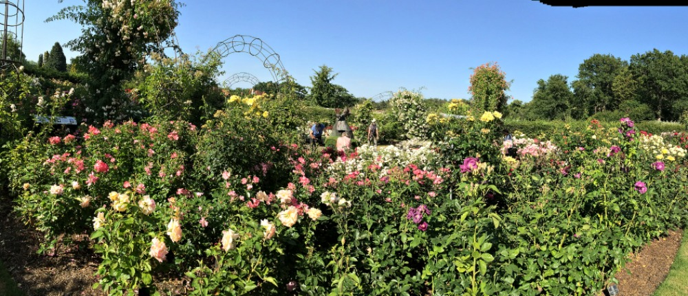 Rose Gardens at Wisley