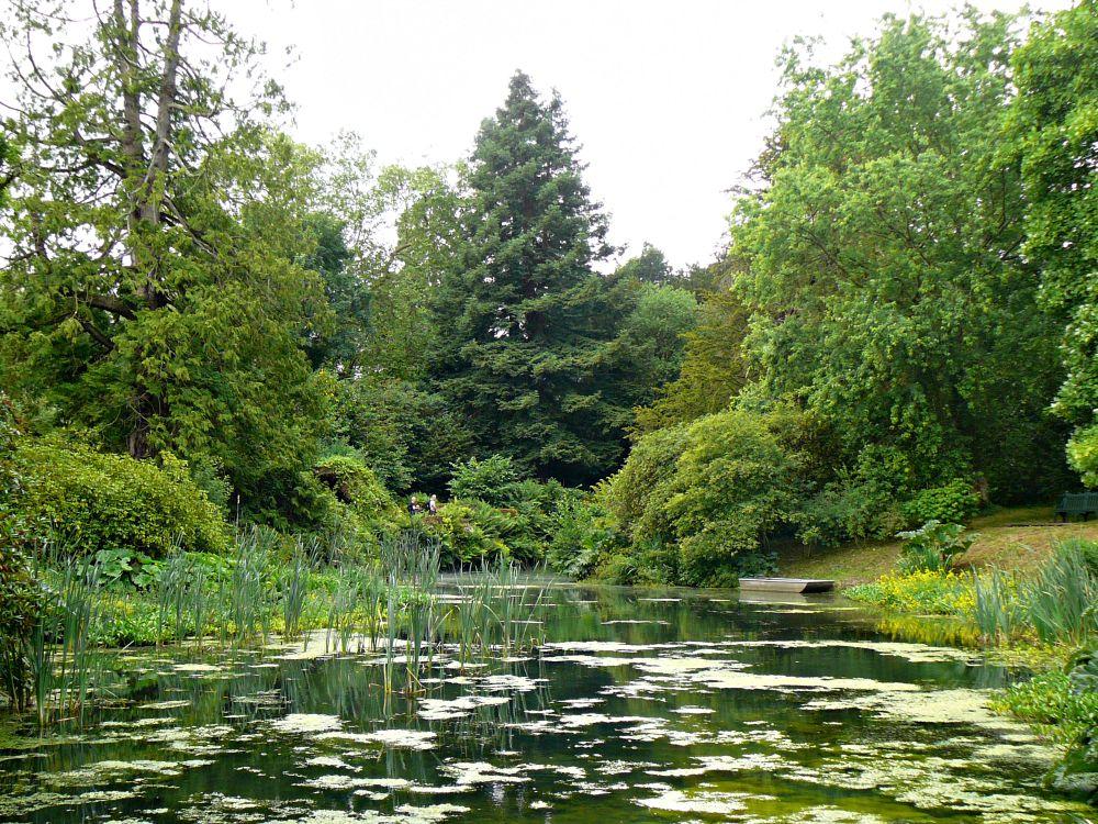 The lake at Woolbedding.