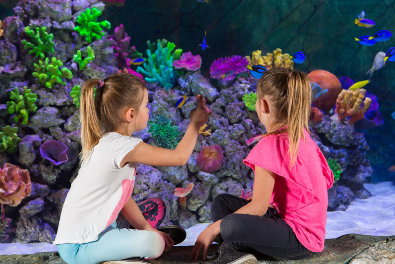 Exhibition: Finding Dory Experience at SEA LIFE Melbourne