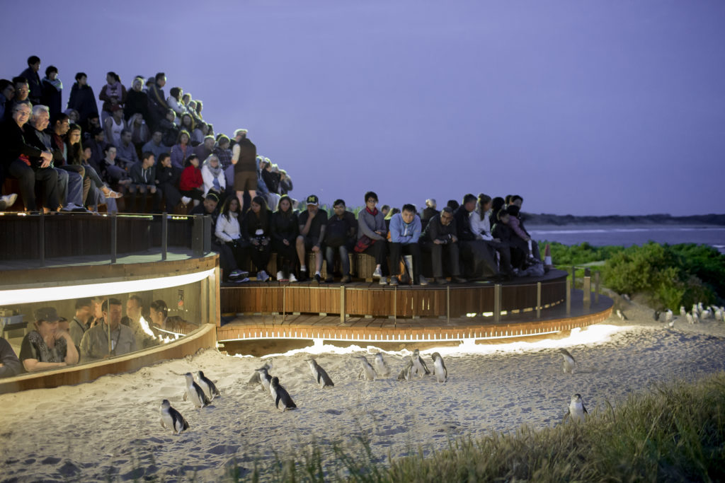 The underground viewing tour also includes time `above ground' on the Penguin Plus stand.