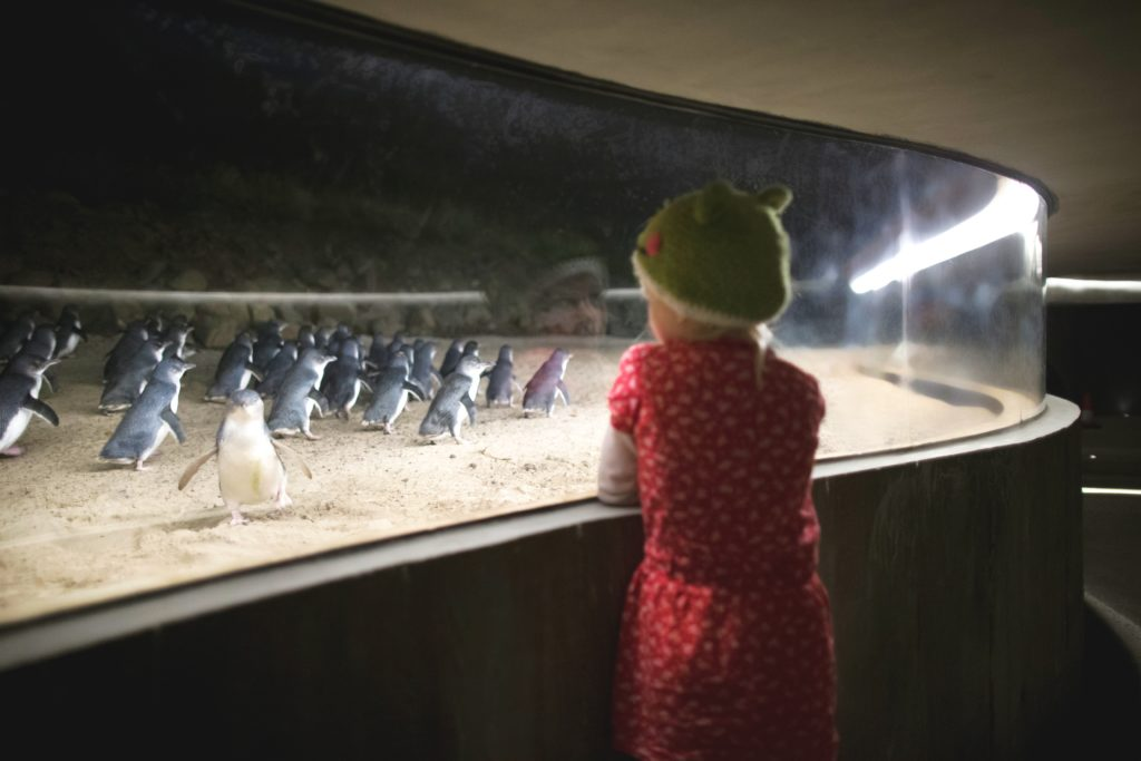 The underground viewing area allows close up views of penguins especially when some come very close to the window.