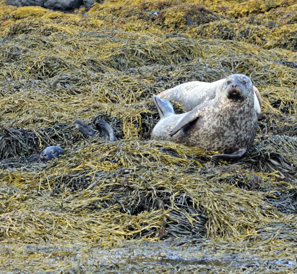 One of the many seal pups we saw.