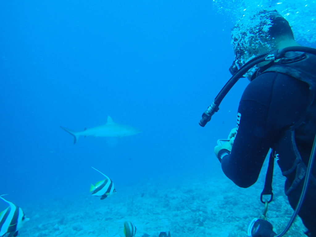 Snorkelling with sharks.